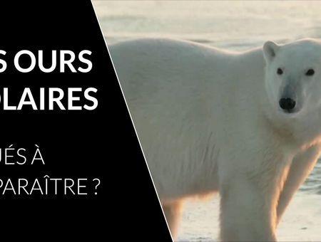Pourquoi vos enfants ne connaîtront pas les ours polaires ?