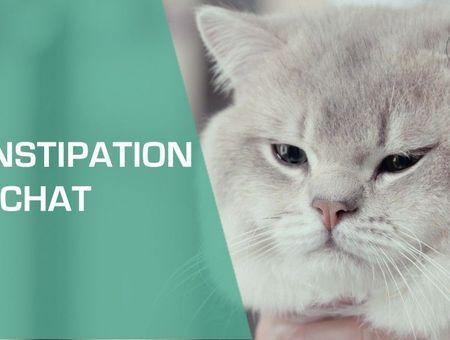 Mon chat est constipé : comment le soigner ?
