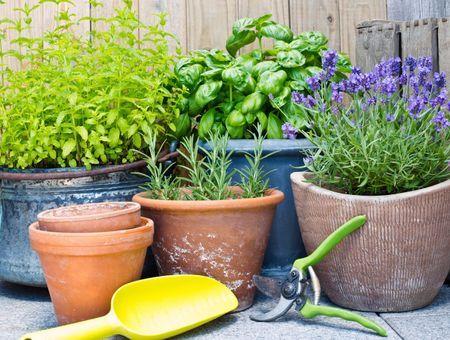 5 plantes à avoir chez soi si on est stressé