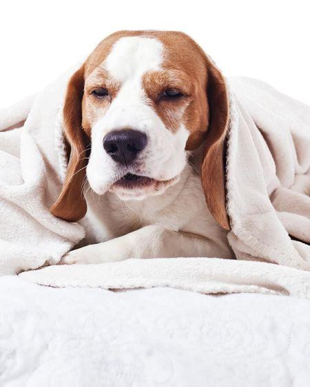 Mon chien tousse, éternue : que faire ?