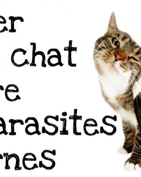 Comment traiter votre chat contre les puces et les tiques ?