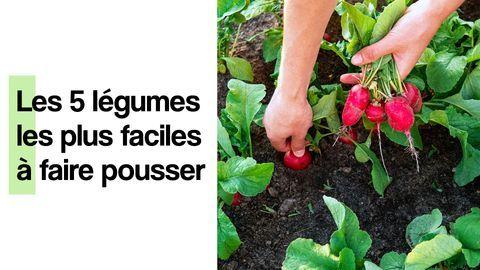 quels legumes planter