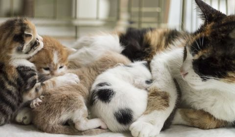 naissance de chatons