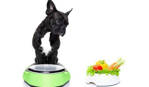 traiter l'obésité du chien