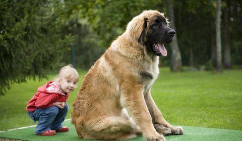 grands chiens