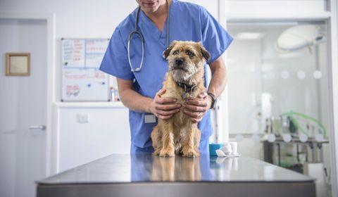 Soins préventifs du chien