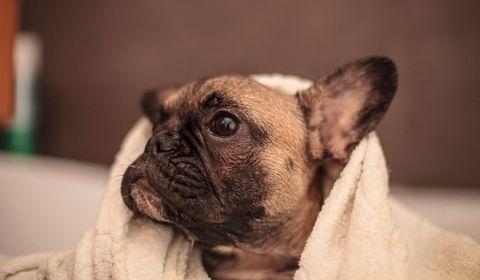 Coronavirus : ni détergent ni gel hydroalcoolique sur les chiens et chats