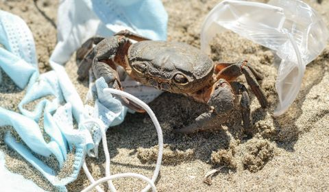 Covid-19: des scientifiques alertent sur l'impact meurtrier des déchets sur les animaux