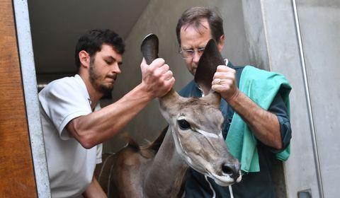 La Palmyre, un zoo investi dans la préservation des espèces