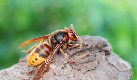 Allergie aux piqûres d'insectes