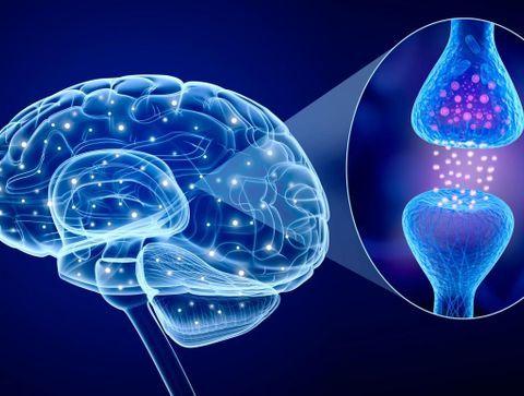 La transmission neuronale : définition, fonctionnement