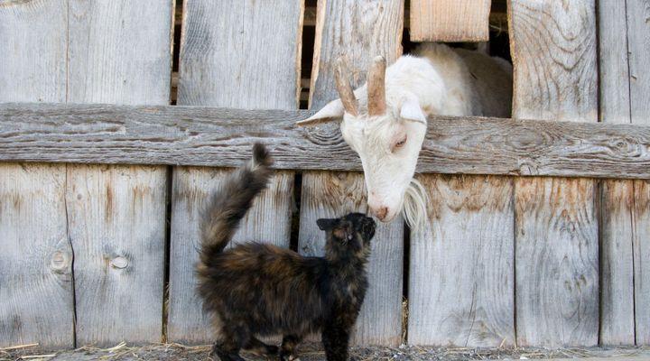 chat à la campagne