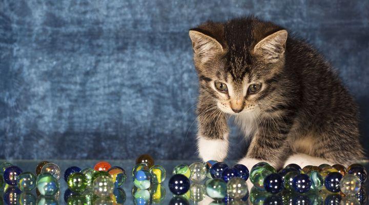 corps étranger chez le chat
