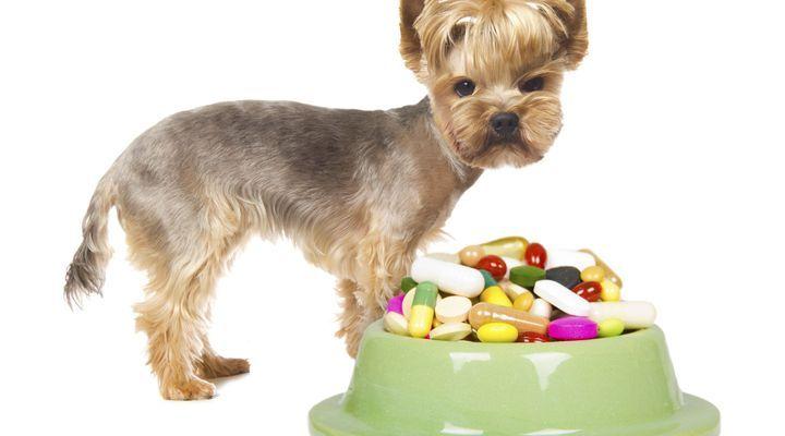 vitamines et suppléments pour les chiens