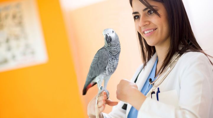 vétérinaire aviaire