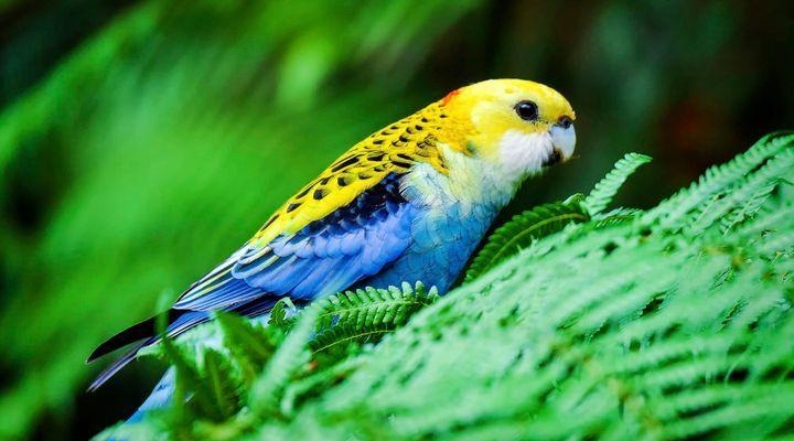 Plantes toxiques pour les oiseaux