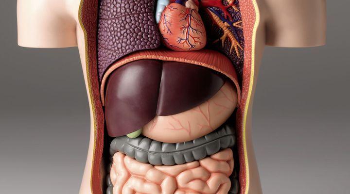 Covid-19 : la maladie d'un seul organe?