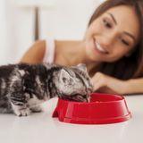 Régime alimentaire du chat : conseils pour lui faire adopter un régime alimentaire équilibré