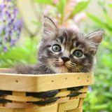 A quel âge adopter un chat ou un chaton ?
