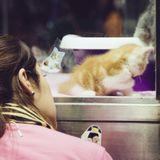 Acheter un chat en animalerie : ce qu'il faut savoir