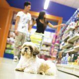 Bien lire les étiquettes des produits pour chien
