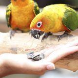 Nourrissage à la main et sevrage de votre oiseau