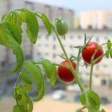 Jardin, cueillette, pêche, chasse : les bonnes pratiques de l'autoproduction alimentaire