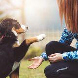 L'adolescent et l'animal domestique