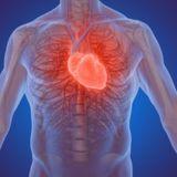 Le risque accru de maladies cardiaques corrélé à un niveau élevé de mauvais cholestérol