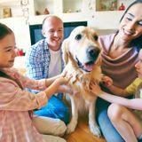 Les chiens, des compagnons bénéfiques pour réduire le risque d'eczéma et d'asthme