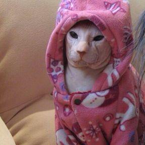 Chat moche en pyjama