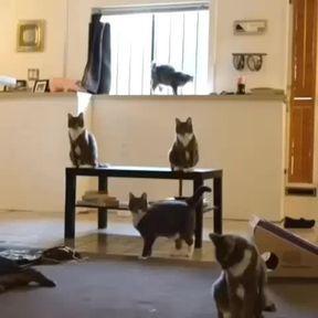 Do the Cat shake !