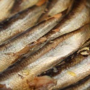 Les sardines en conserve
