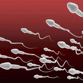 Combien compte-t-on de spermatozoïdes dans une éjaculation ?